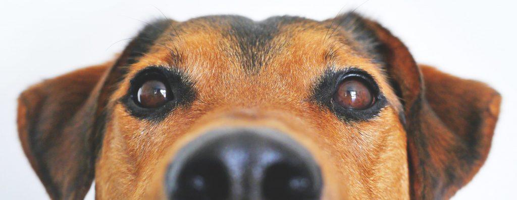 Reiki für Tiere Hunde Fernreiki Villach